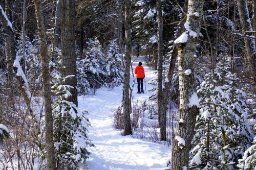 Snowshoeing Kerry Wood Nature Centre Red Deer