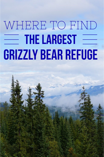 Worlds largest grizzly bear refuge