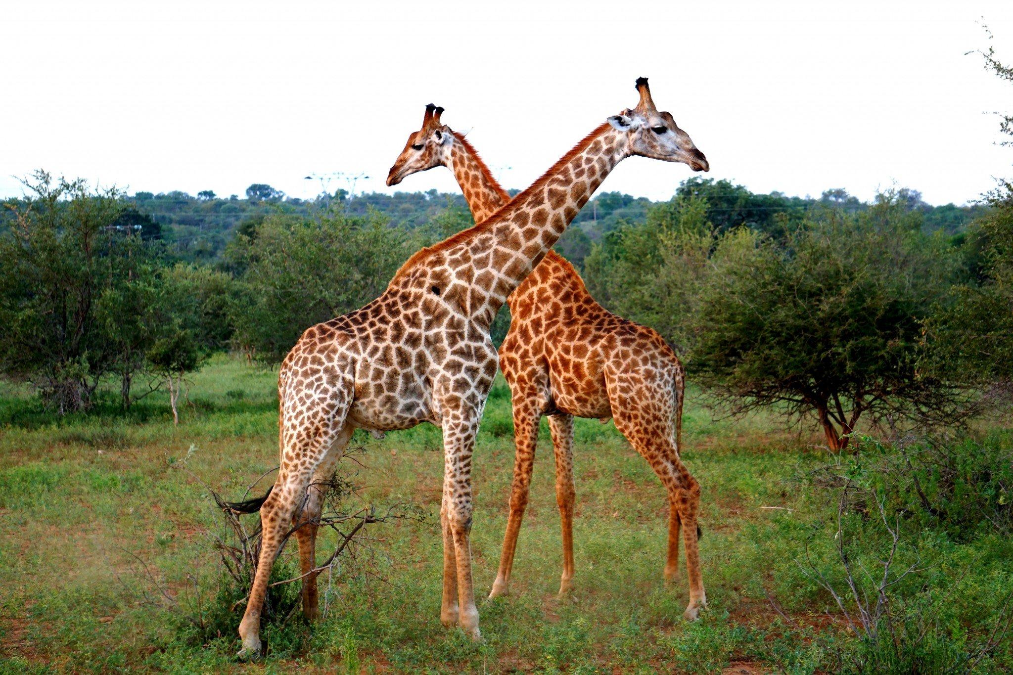 African Wildlife Greater Kruger National Park - Travel ...