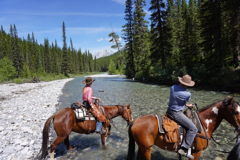 Best Horse Shoes For Trail Riding Horse