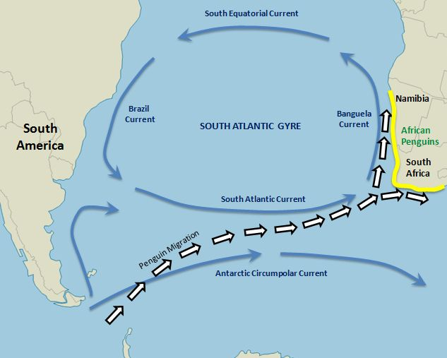 South african penguins of boulder beach travel tales of life map south atlantic ocean currents publicscrutiny Images