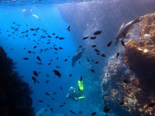 A Swim With Sea Lions – Los Islotes Mexico